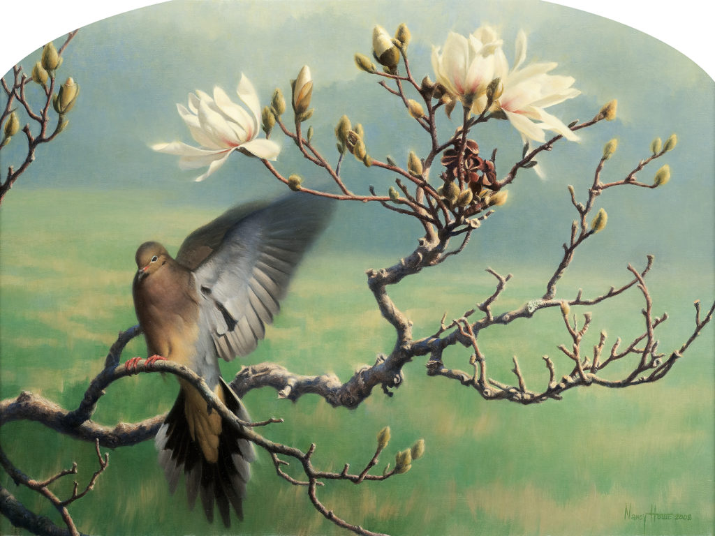 Spring to Life • 2008 • 18 x 24 • Oil on Linen • Mourning Dove and Star Magnolia • Available Tilting at Windmills Gallery